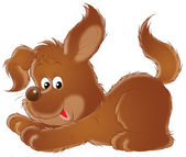 Brown puppy — Stock Photo