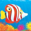 Tropical fish — Stock Photo #9260026