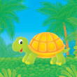Tropical turtle — Stock Photo