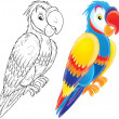 Colourful parrot - Stock Photo