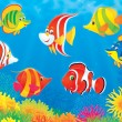 Tropical fish above a colorful coral reef — Stock Photo