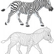 Zebra walking — Foto Stock