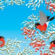 Bullfinches — Stock Photo