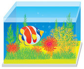 Aquarium mit einem tropischer fisch — Stockfoto
