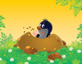 Mole in a borrow — Stock Photo
