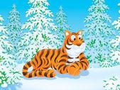 老虎在针叶林 — 图库照片