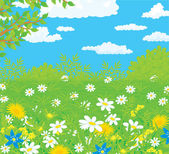 Field with flowers — Stock Vector