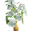 Money tree — Stock Photo #10606077