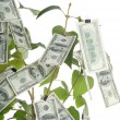 Money tree — Stock Photo #10606078