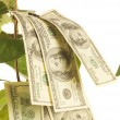 Stock Photo: Money tree