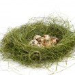 Nest with eggs — Stock Photo #10606313