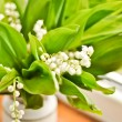 Lilly of the valley — Stock Photo
