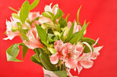 Bouquet of alstroemeria isolated on red — Stock Photo