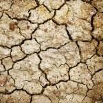 Dry land — Stock Photo #10475941