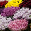 Stock Photo: Flowers market