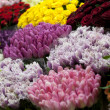 Flowers market — Stock Photo #9715891