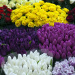 Flowers market — Stock Photo #9715979