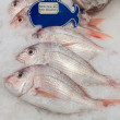 New Zealand red snapper fish on ice — Stock Photo