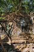 Banyan trees in Beng Mealea temple, Cambodia — Stock Photo