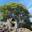 Banyan trees on ruins — Stock Photo