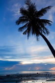 Sunset with palm tree silhouette — Foto Stock