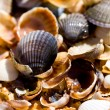 Sea shell — Stock Photo #8126282