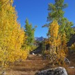 The trees with colorful foliage and large  boulders - Foto Stock