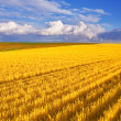Stock Photo: Field after harvesting