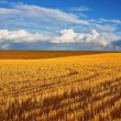 Solar autumn midday on fields — Stock Photo