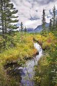 Cold stream among multi-coloured grasses — Stock Photo