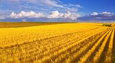収穫後フィールド — ストック写真
