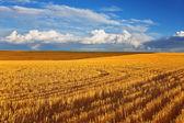 Solar autumn midday on fields — Stock Photo