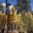 Stock Photo: Autumn deciduous forest
