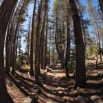Picturesque mountain footpath inl park Yosemite. — Stock Photo #10240009
