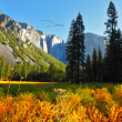 The Yosemite park above which the bird's flight flies by — Stock Photo #10246753