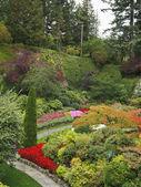 очаровательная многоцветный цветок кровать — Стоковое фото