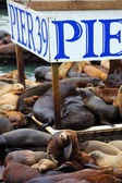 The sea lions are heated on wooden platforms — Stock Photo