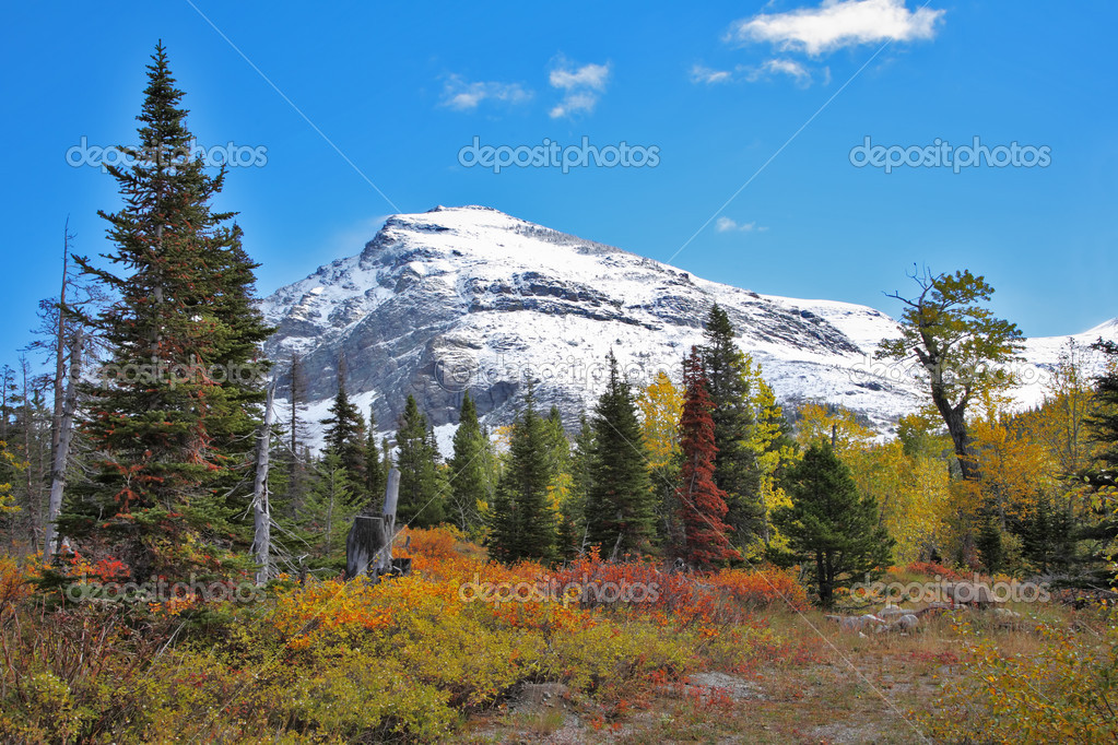 Conic huge snow mountain and plain with autumn bushes — Stock Photo #10241299