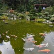 Stock Photo: A small pond with goldfish