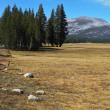 The Yosemite Park  - dry yellow grass, fur-trees and stones — Stock Photo