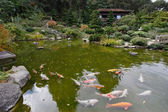 A small pond with goldfish — Stock Photo