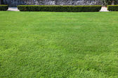 Magnificent lawn — Stock Photo