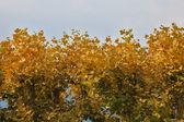De gula blad — Stockfoto