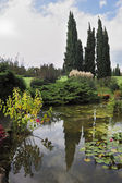 The pond, cypress and lily — Stock Photo
