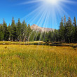 Stock Photo: Quiet part of Yosemite Park in early fall