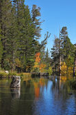 Autumn forest and blue sky reflected in water — Stock Photo