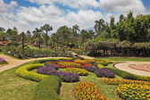Magnificent flower beds, green lawns and tropical trees — Stock Photo