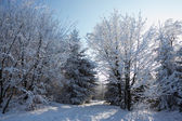 A Christmas Day. Snow-covered glade — Stock Photo