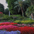 Stock Photo: Wonderful bright flowerbeds
