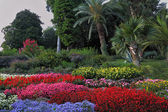 Wonderful bright flowerbeds — Stock Photo